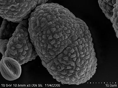 显微镜下的世界 - 及时渔、及时语 - 及时渔的空间